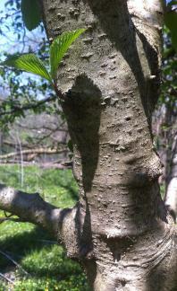 Unidentified tree